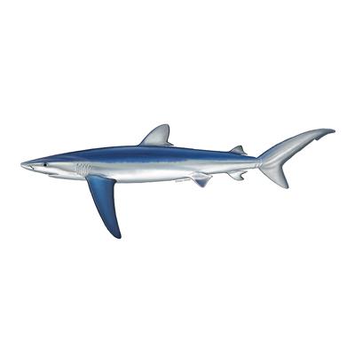 blue shark cornwall good seafood guide