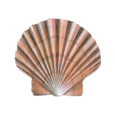 Scallop by Sarah McCartney